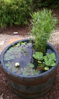I saw this at the fair; make your own water feature. Aquatic plants growing in barrel. Miniature lily pads! Love it. Making this next spring!