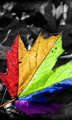 Colourful leaf.....
