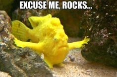 You are excused. This fish is moving the rocks out of the way. LOL