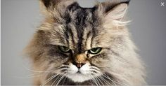 WATCH What The Cats Are Saying In This Hilarious Litter Box Ad... I'm Cracking Up!!