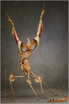 Mantis. OMG I have always wondered what planet mantises come from!!!! This one gets my vote for most like an alien.