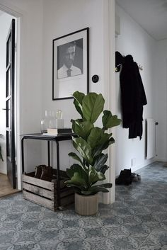 plant for an entry way Room Interior, Home Interior Design, Interior And Exterior, Hallway Inspiration, Interior Inspiration, Halls, Pinterest Home, My New Room, Room Decor