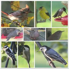 JBigg's Little Pieces: Barns, Blooms, and Birds - Wk 10