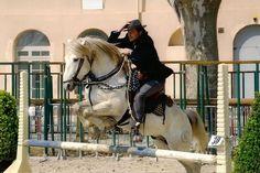 Stallion Camargue ocarina of cazers - Herd of Cazers - SAINT-GILLES
