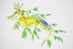 An original watercolour painting of a leafy sea dragon.A4 (approximately 21 x 29.7 cm) in size on 300gsm hot pressed watercolour paper.