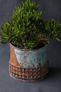 Succulent Crassula argentea 'Finger Jade'