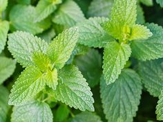 Plantele sunt folosite pentru vindecarea bolilor de secole întregi. Chiar și în ziua de azi plantele reprezintă o sursă de terapie și vindecare pentru foarte multe afecțiuni. Iată o listă cu cele mai puternice plante medicinale, care ajută la vindecarea a numeroase boli: