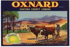 Vintage Can & Fruit Labels - Oxnard Lemons Ventura County California, Oxnard California, California Love, Southern California, California History, Vintage California, Vintage Labels, Vintage Postcards, Vintage Ads