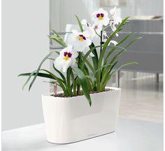 WindowSill Self-Watering Planter