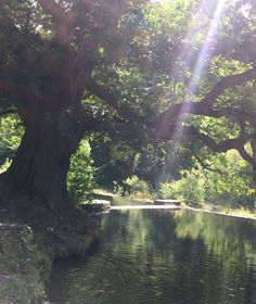 Beautiful scenery, light beams glazing onto the tree 🌲