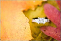 Fall Engagement pictures engagement ring in fall leaves at Bennetts Creek park in Suffolk Virginia | Audrey Rose Photography