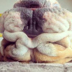*giggle* snoring