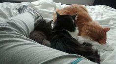 Dormindo com gatinhos! Tudo de bom!