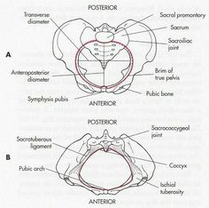 Pelvic diagram, showing the 4 different shapes of pelvis