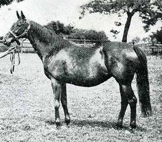 Ornament (GB) 1887 B.m. (Bend Or (GB)-Lily Agnes (GB) by Macaroni (GB) Dam of the great Sceptre (GB), Champion Stakes winner Labrador (GB), & stakes winner Star Ruby (GB)