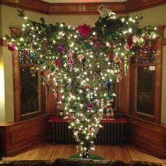 german christmas tree | Obligatory (Upside-Down) Christmas Tree Picture. #Polska #NoFilter ...