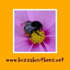 How to start beekeeping, links to FREE information including keeping bees, how to build a bee hive with FREE downloadable plans and a FREE book to download, demonstration videos, diseases, gardening..