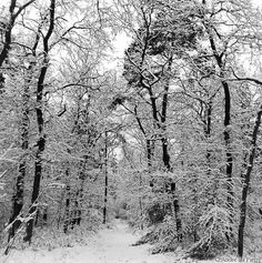 trees | Winter Trees, trees covered in snow in winter