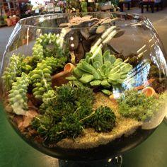 Succulent terrarium !