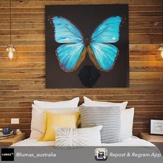 Dane and Leanne present a master bedroom to judges Colin & Justin in Week 3 of Reno Rumble Reno Rumble, Butterfly Artwork, Red Team, Beautiful Interiors, Our Love, Master Bedroom, Tapestry, Throw Pillows, Instagram Posts