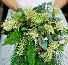 Lime Grevillea Flowers