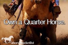 All of the 4 1/2 horses I've owned (I leased one), they have all been quarter horses