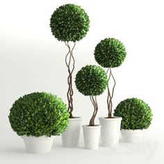Collection of Plants 2
