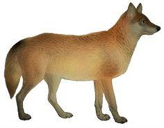 Most Endangered Animals, Wolf Illustration, Wolf Pup, Cascade Mountains, Northern California, Pacific Northwest, British Columbia, Mammals, North America