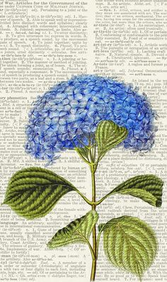 hydrangea on dictionary page, FauxKiss