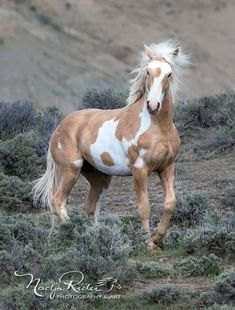 Wild Horses of Sand Wash Basin ( Most Beautiful Horses, All The Pretty Horses, Animals Beautiful, Cute Horses, Horse Love, Animals And Pets, Cute Animals, Majestic Horse, Wild Mustangs