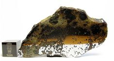 Meteorite Picture of the Day from Tucson Meteorites
