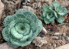Cacti And Succulents | Cacti and Other Succulents Desert Landscaping for Wildlife