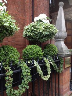 Window Boxes in London, ivy garland, white pansies, boxwoods