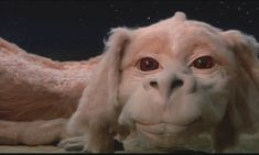 "You got: Falkor from ""The NeverEnding Story"" Wise beyond your years, you always give the best advice. You're seriously the best friend anyon..."