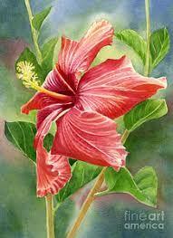 Resultado de imagem para hibiscus flower paintings