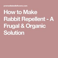 How to Make Rabbit Repellent - A Frugal & Organic Solution