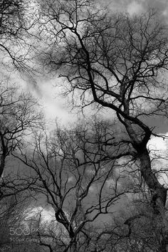 forbidden forest by schardttim Black and White Photography #InfluentialLime
