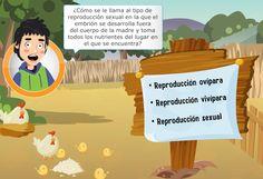 LA REPRODUCCIÓN DE LOS ANIMALES: Vivíparos y Ovíparos « Juegos gratis y Software Educativo