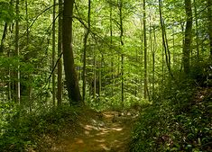 north-america-pisgah-national-forest-625x450.jpg 625×450 pixels