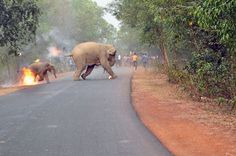 The horror elephants face in India — in one heartbreaking photo