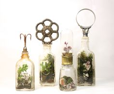 Set of terrariums for a client in Japan.