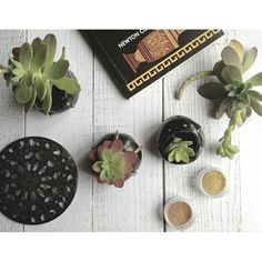 Mini planters in polymer clay: coordinated but different, they have asymmetrical shapes that recall the natural ones such as eggs, stones and shells...