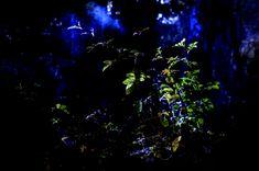 Botanikk og digital kunst   Elisabeth Stenseth Digital Art, Art