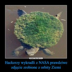 Polish Memes, The Lorax, Some Quotes, Avatar, Haha, Universe, Fandoms, Humor, Animals