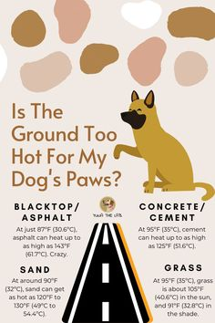 Fun Facts About Dogs, Dog Facts, Dog Health Tips, Dog Safety, Safety Tips, Dog Information, Summer Dog, Dog Care Tips, Pet Life