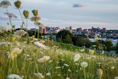 https://flic.kr/p/xrHbJA | Hillside | From a recent stroll along North Street and the field near the East End Community School.    Corey Templeton Photography | Portland Daily Photo | Facebook