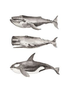 Three Stacked Whales Wall Art Prints by Two if by Sea Studios | Minted