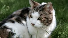 What to Look for in Your Senior Cat's Food: As our beloved pals enter their golden years, diet and nutrition can help senior cats to maintain their health and happiness, and to age gracefully. The following guidelines will help you pick the best food for your senior cat. #cats #health #pets