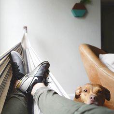 Cute Brown Pitbull • • #dog #dogsofinstagram #dogs #instadog #dogstagram #doglover #dogoftheday #instagramdogs #lovedogs #yorkshire #dogsofig #doglovers #doglife #rescuedog #cutedog #dogsitting #doglove #dogslife #frenchbulldog #mydogiscutest #pets #pitbull #pitbullsofinstagram  #pitbulls #pitbulllove #pitbulldog #pitbullsofig #pitbullpuppy #pitbullsofficial #americanpitbullterrier