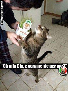 """""""Oh mio Dio, è veramente per me?"""" (www.VignetteItaliane.it)"""